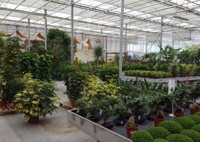 Garden-Center-5-min