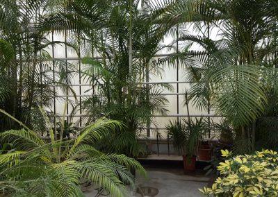 plants-xxl-1