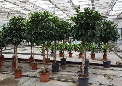 plants-xxl-10