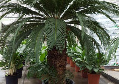 plants-xxl-11