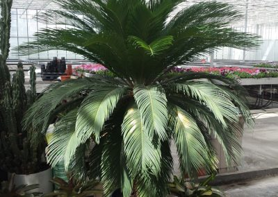 plants-xxl-12