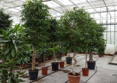 plants-xxl-2