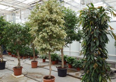 plants-xxl-3
