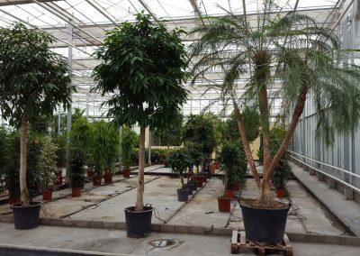 plants-xxl-4