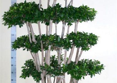 plants-xxl