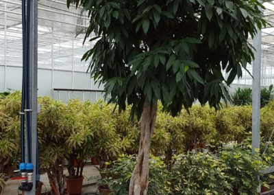 plants-xxl-8