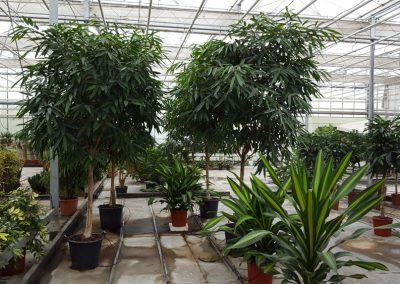 plants-xxl-9